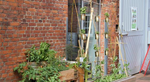2014-mai-urban-gardening-fsj-projekt-pflanzen